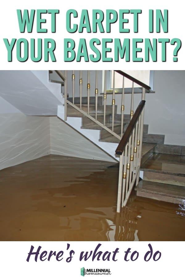 wet carpet in a basement